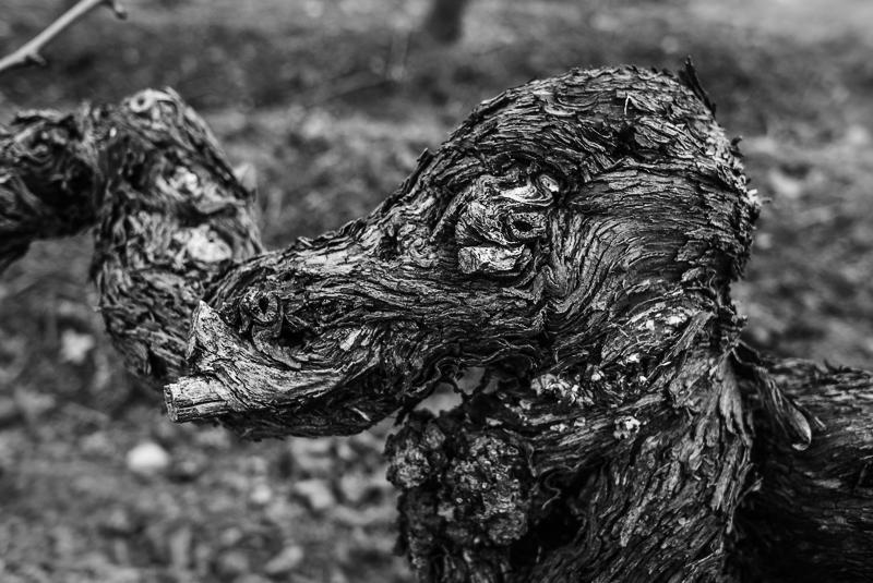 cep de vigne - éléphant © Jean-Yves Bardin 2012