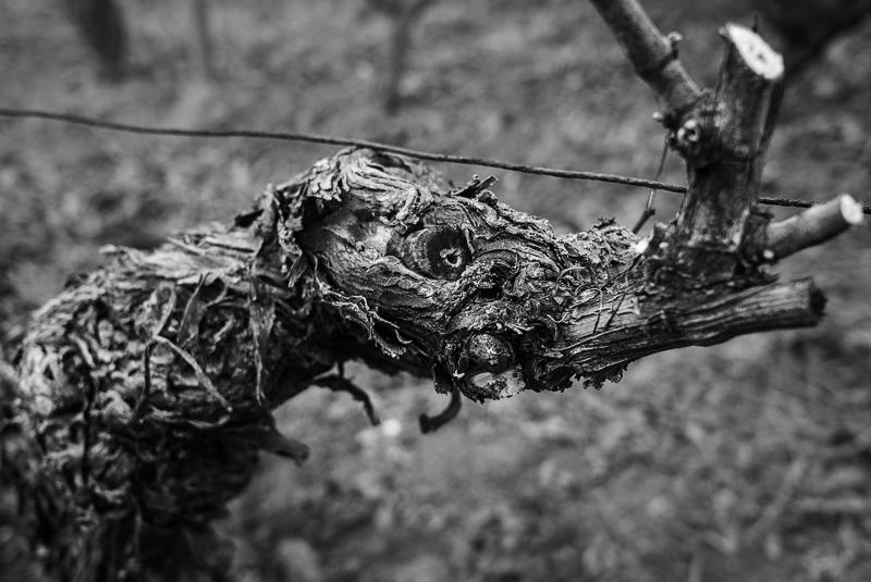 cep de vigne - bestiaire imaginaire © Jean-Yves Bardin 2012