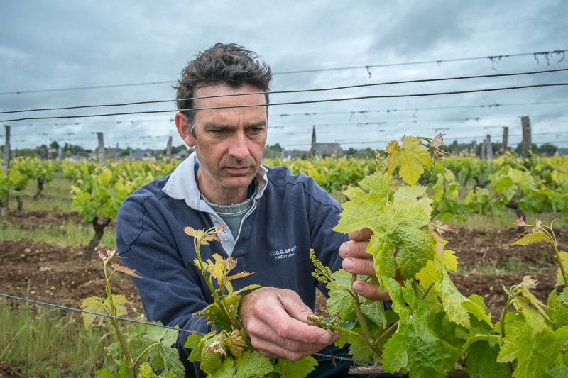 Jean-Yves BARDIN, Jean-Christophe Garnier, vigneron, bio, vin nature, vin, wine, photographie, photography