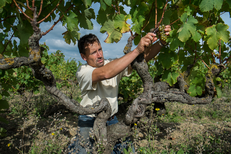 Jean-Yves BARDIN, Stéphane Bernaudeau, vins d'anjou, vigneron bio, vigneron d'anjou, biodynamie, vin, wine, photographie, photography