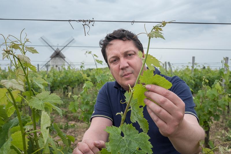 Jérémie Mourat, vignobles Mourat, Clos Saint-André, Fiefs vendéens, Loire méridionale, gueules de vigneron Vendée, vigneron bio, vin bio, organic wine, winemaker, Jean-Yves bardin photographe Gueules de vignerons, portraits de vignerons, Vignerons de Loire, Fiefs vendéens