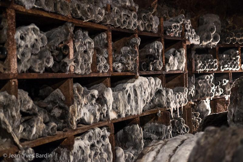 domaine des Roches, Chinon, Jerôme Lenoir, Gueules de Vignerons, portrait de vignerons, winemaker, Jean-Yves bardin photographe Gueules de vignerons, portraits de vignerons, biodynamie, cave, chai, barrique, bonde, dégustation, biodynamie, vin bio, moisissure