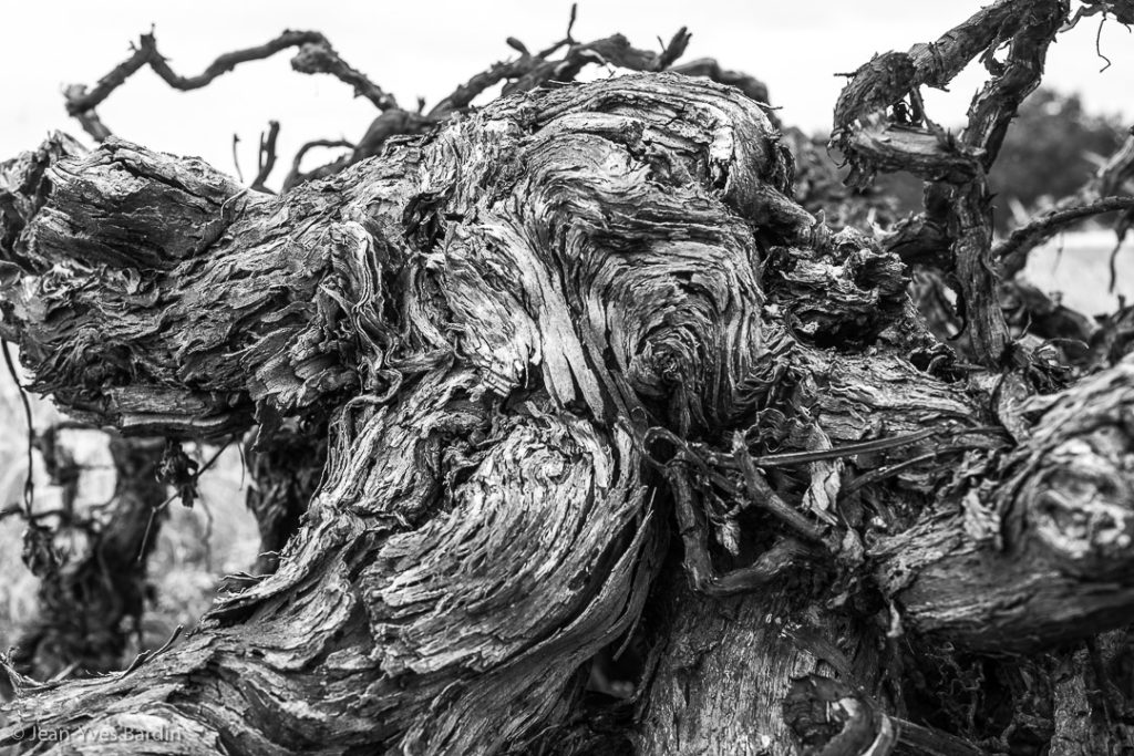 """Ceps de vigne, série """"les déracinés"""", Jean-Yves Bardin, photographie, photographie noir et blanc, exposition photographique Regards de Loire, 20 ans mission Val de Loire patrimoine mondial de l'UNESCO © Jean-Yves Bardin photographe auteur"""